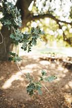 green oak leaves on a branch