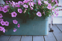 petunias in a flower box