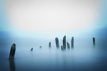 dead trees in water, mist, and fog
