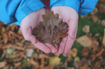 kid holding fall leaves
