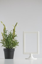 house plant and white frame