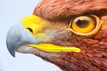 Eagle close up