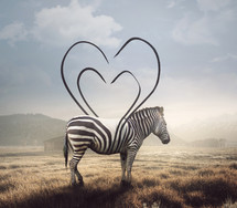A surreal image of a zebra and its stripes making a heart shape.