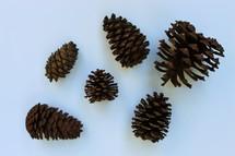 pine cones on white background