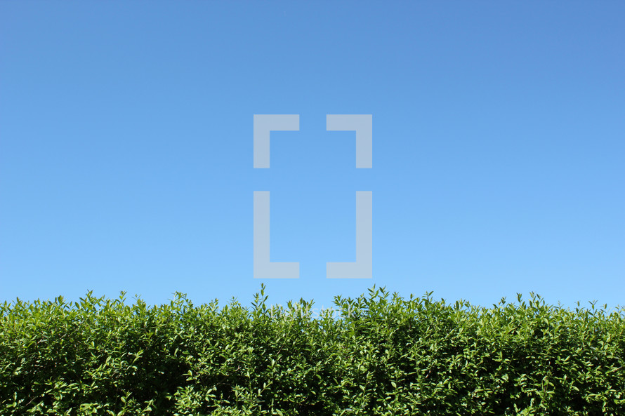 blue sky above bushes