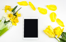daffodil, flowers, spring, bouquet, iPad, tablet, yellow flowers, yellow, white background