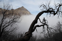 A twisted tree reaching into fog.