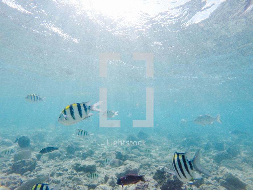 fish swimming in the ocean