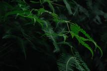 ferns outdoors