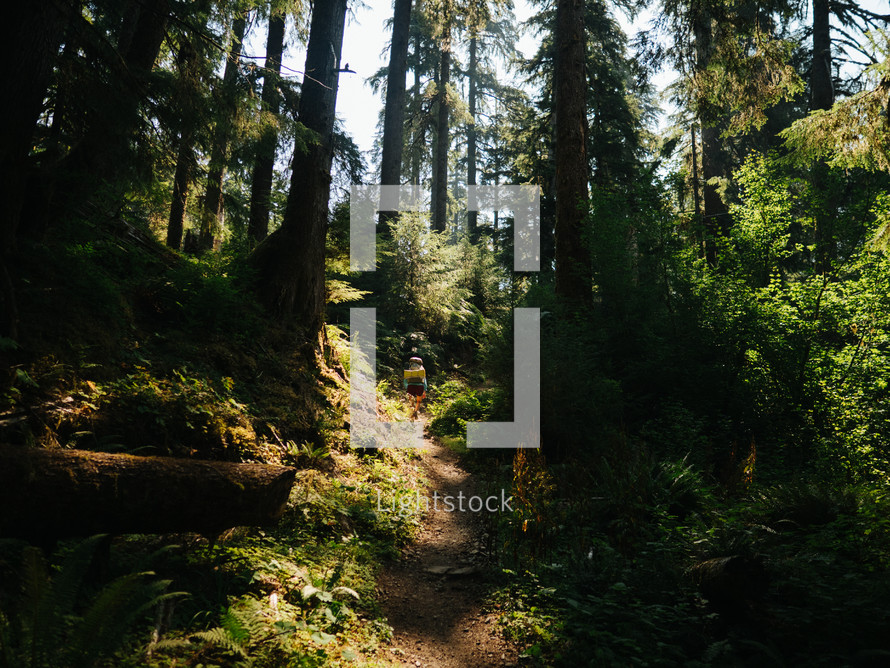 hiking a forest trail