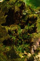 moss on a tree stump