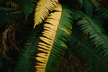 green and yellow fern