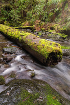 moss on a log over a creek