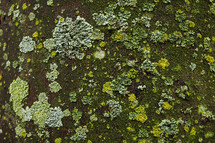 moss and lichen on a rock