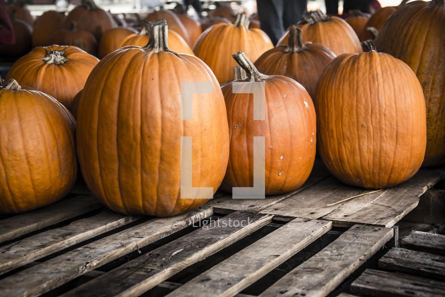 pumpkins on wooden pallets.