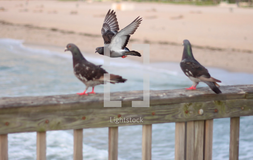 pigeons on a railing