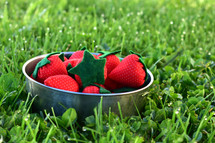 bowl of strawberries in clover