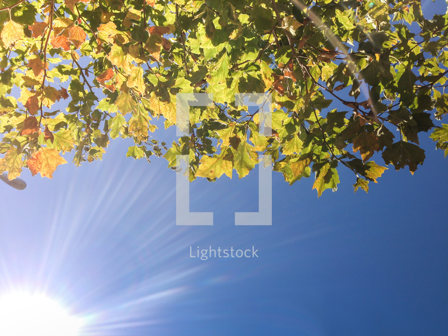 sunlight and leaves on a tree branch