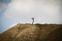 Lone tree on hill on Israel