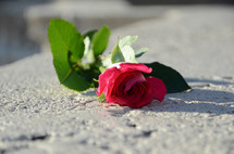 a rose on concrete