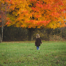 toddler walking in green grass near fall tree with orange leaves