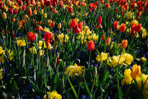 flowers in a spring garden
