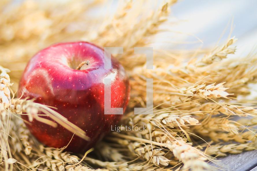 apple resting on wheat grains