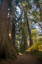 tall trees in a forest