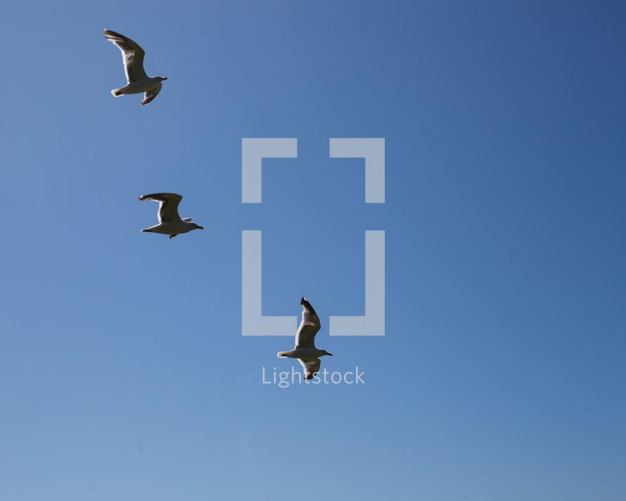 segulls in flight