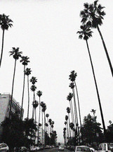 tall palm trees lining a street