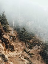 fog over a mountainside forest