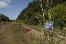Flower by a railroad track.