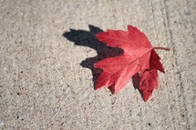 red leaf on sidewalk
