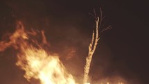 Fire engulfing a tree limb.