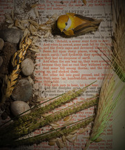 wheat, sow, bird, pages of a Bible