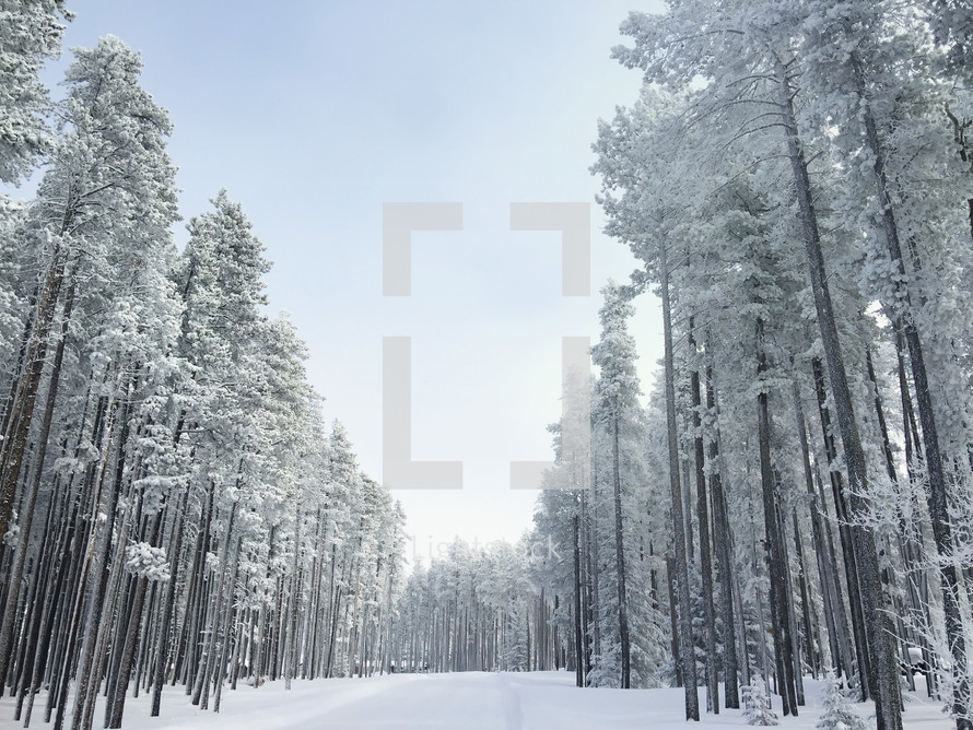 winter trees and snow covered road