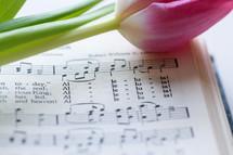 Alleluia - tulip on an Easter hymn