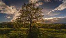 Tree in the field. Sun behind tree.