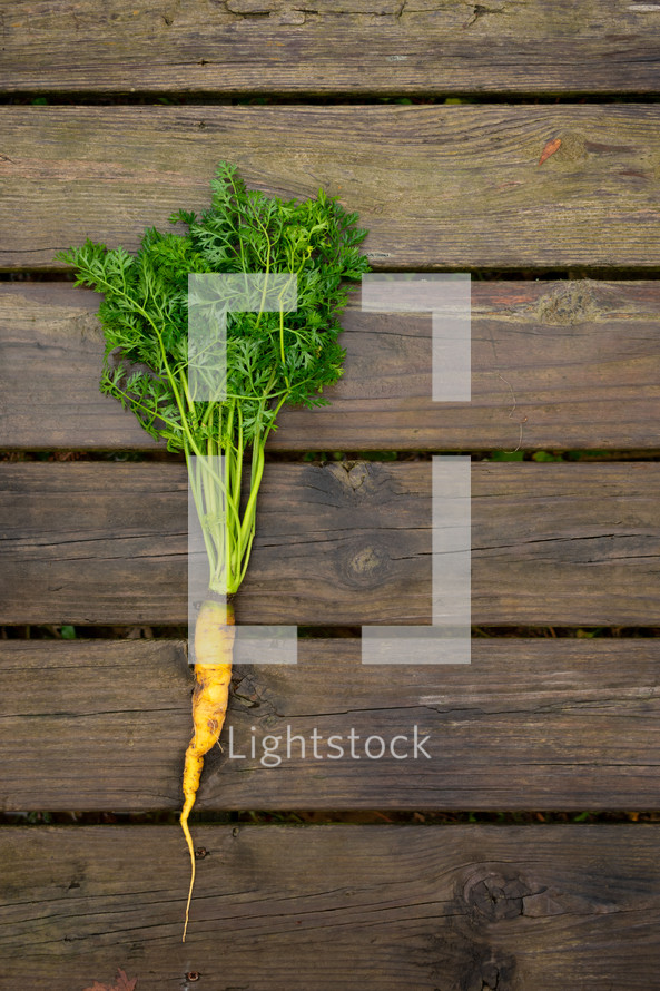 carrots on a wood background
