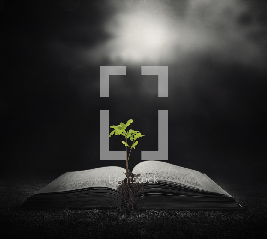 sprouts growing from the pages of a Bible