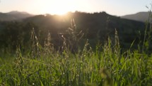 tall grasses and sunlight in a field