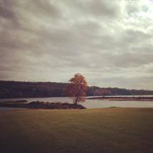Large tree beside water