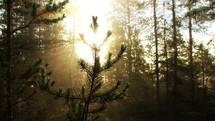 twinkling sunlight in a forest