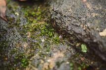 Moss growing on tree bark.