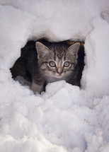 A kitten in the snow.