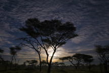 trees in Africa at sunset