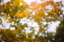 blurry fall leaves
