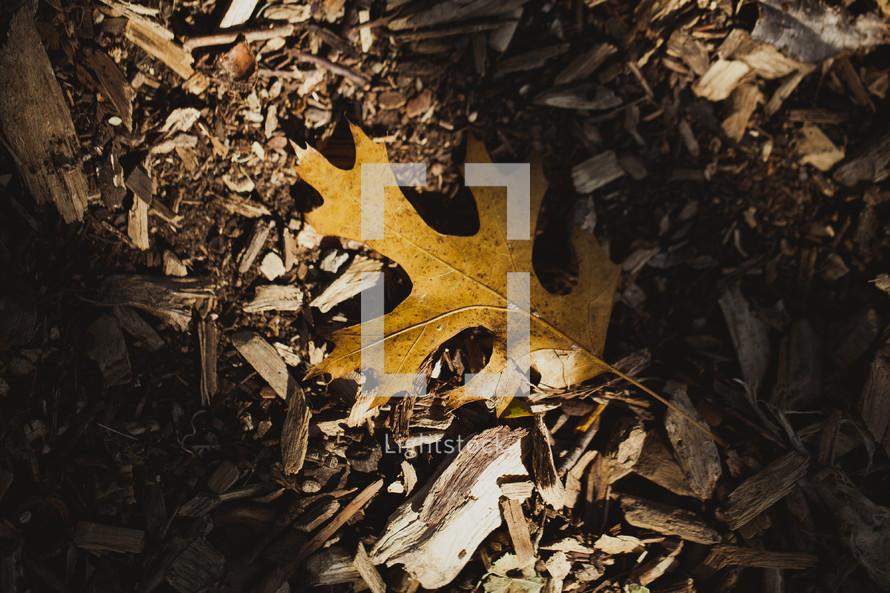 A fall oak leaf on the ground.