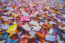 background of fall leaves on the ground