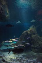 sharks and fish in an aquarium